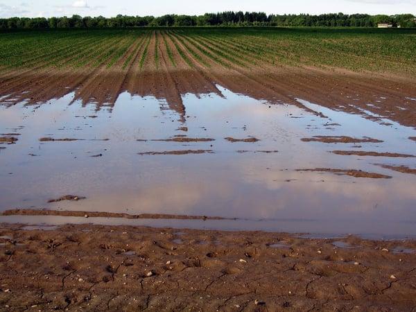 exces eau champ innondation