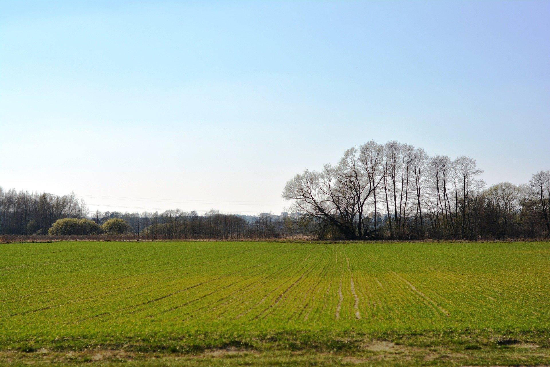 Comment calculer la densité la plus juste pour mon blé ?