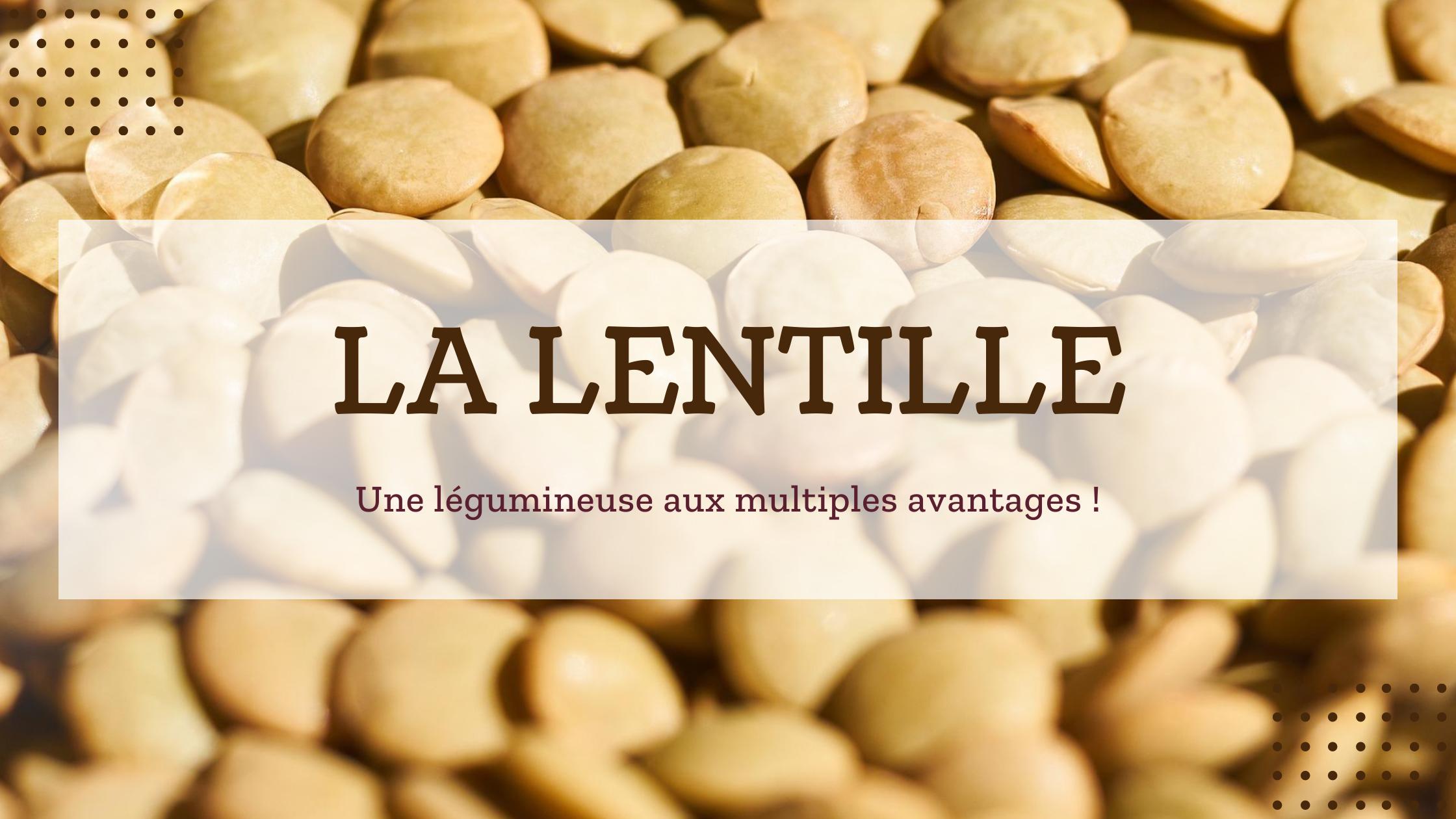 Lentille : une légumineuse idéale pour diversifier son assolement