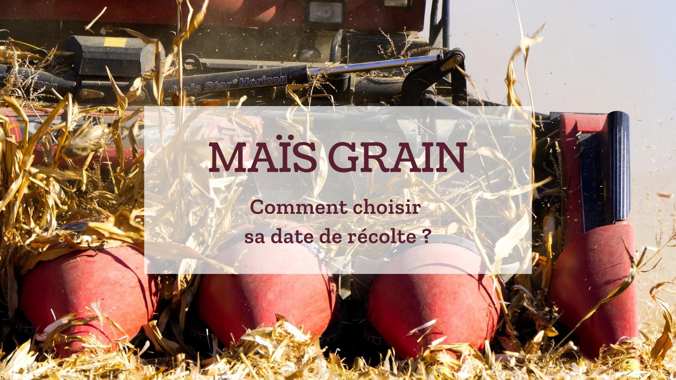 Maïs grain : comment choisir sa date de récolte ?