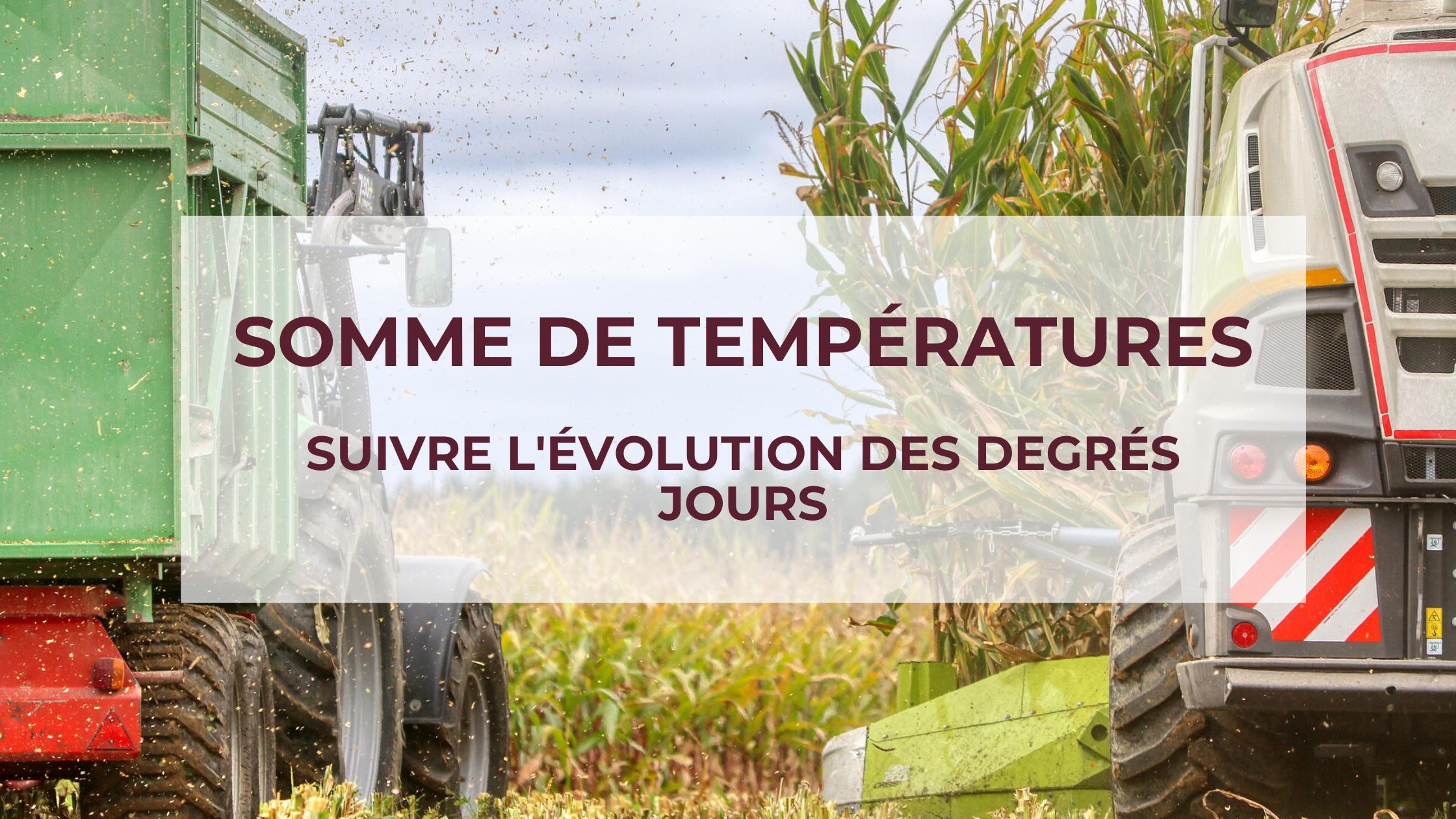 Somme de température: pourquoi suivre l'évolution des degrés jours ?