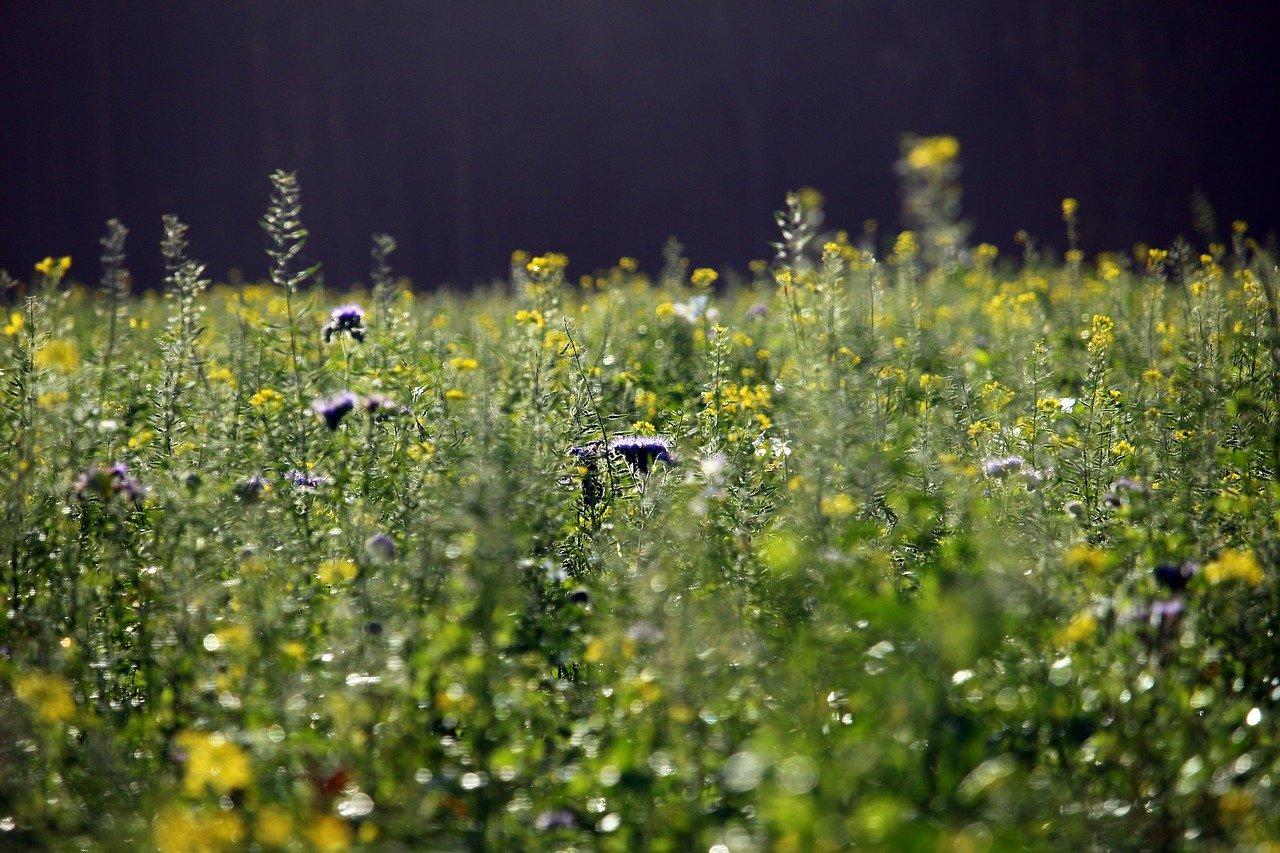 Pourquoi intégrer des couverts végétaux dans sa rotation?