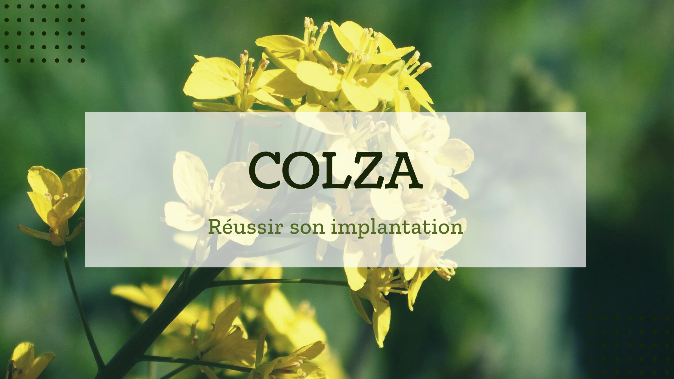 Réussir l'implantation de la culture de colza sur ses parcelles