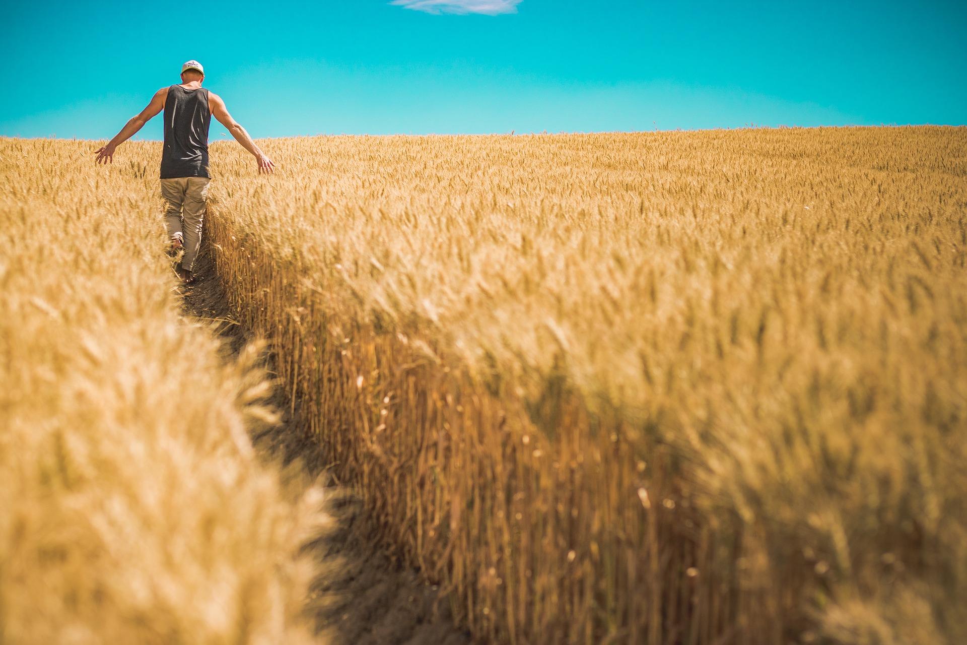 L'assurance récolte aléas climatiques : comment ça marche ?