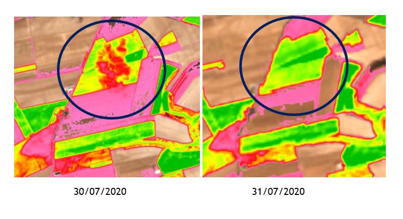 Landsat8-versus-vs-Sentinel2-spotifarm-teledetection-agriculture